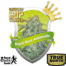 Royal Haze Automatic Feminized Seeds (Royal Queen Seeds)
