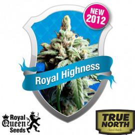 Royal Highness Feminized Seeds (Royal Queen Seeds)