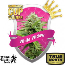 White Widow Feminized Seeds (Royal Queen Seeds)