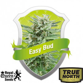 Easy Bud Automatic Feminized Seeds (Royal Queen Seeds)