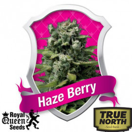 Haze Berry Feminized Seeds (Royal Queen Seeds)