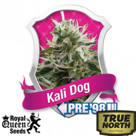 Kali Dog Feminized Seeds (Royal Queen Seeds)