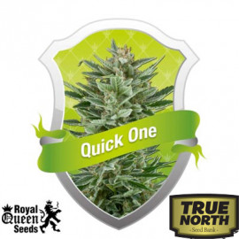 Quick One Automatic Feminized Seeds (Royal Queen Seeds)