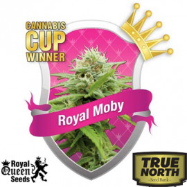 Royal Moby Feminized Seeds (Royal Queen Seeds)