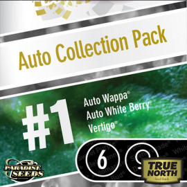 AUTO Collection pack #1 FEMINIZED Seeds (Paradise Seeds)