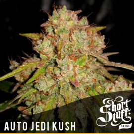 AUTO Jedi Kush FEMINIZED Seeds (Shortstuff Seeds)
