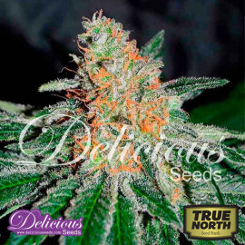 Deep Mandarine CBD FEMINIZED Seeds (Delicious Seeds)