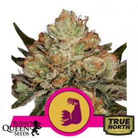 HulkBerry Feminized Seeds (Royal Queen Seeds)