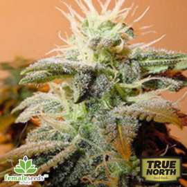 Indoor Mix Feminized Seeds  (Female Seeds)