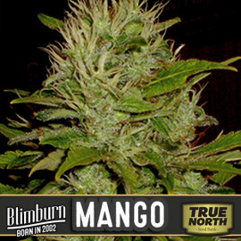 Mango Feminized Seeds (BlimBurn Seeds)