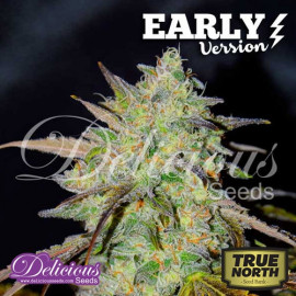 Marmalate Early Version FEMINIZED Seeds (Delicious Seeds)