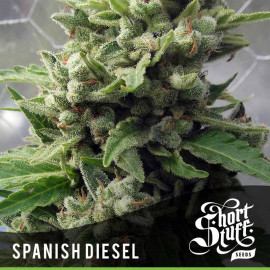 AUTO Spanish Diesel FEMINIZED Seeds (Shortstuff Seeds)
