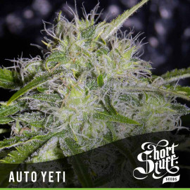 AUTO Yeti FEMINIZED Seeds (Shortstuff Seeds)