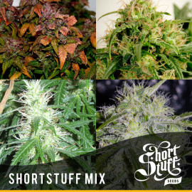 Shortstuff Mix AUTOFLOWERING FEMINIZED Seeds (Shortstuff Seeds)