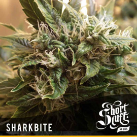 Shark Bite AUTOFLOWERING FEMINIZED Seeds (Shortstuff Seeds)