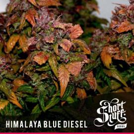 Himalaya Blue Diesel AUTOFLOWERING FEMINIZED Seeds (Shortstuff Seeds)