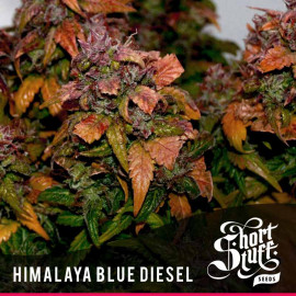 Himalaya Blue Diesel AUTOFLOWERING REGULAR Seeds (Shortstuff Seeds)