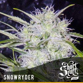 Snow Ryder AUTOFLOWERING FEMINIZED Seeds (Shortstuff Seeds)