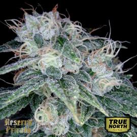 Sour Diesel FEMINIZED Seeds (Reserva Privada)