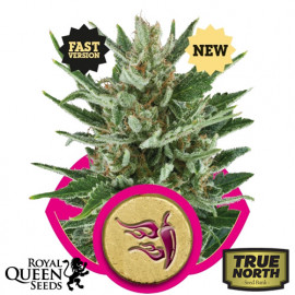 Speedy Chile FAST VERSION Feminized Seeds (Royal Queen Seeds)