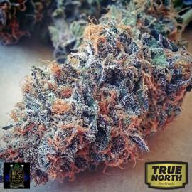 Ultimate Purple REGULAR Seeds (BC Bud Depot)