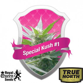 Special Kush #1 Feminized Seeds (Royal Queen Seeds)