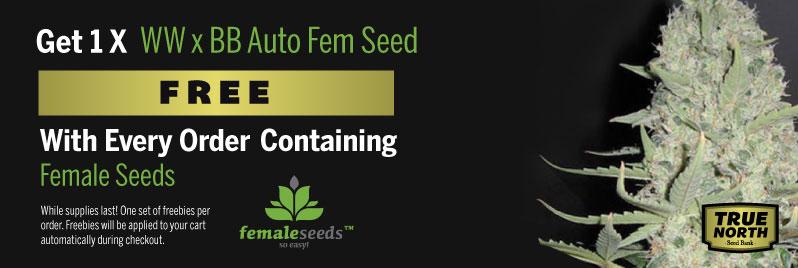 Female Seeds Promo