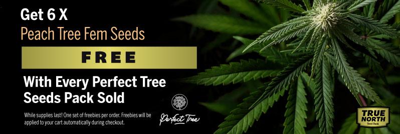 Perfect Tree Seeds Promo