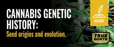 Cannabis Genetic History: Seed Origins & Evolution