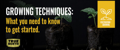 Growing Cannabis Techniques