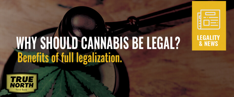 Why Should Cannabis Be Legal? Benefits of Full Legalization