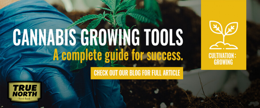 Cannabis Growing Tools: A Complete  Guide For Success