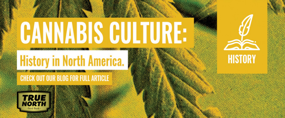 Cannabis Culture History In North America