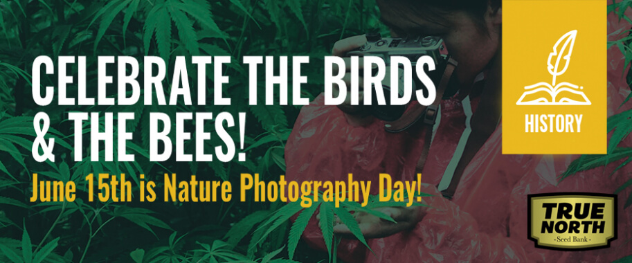 Celebrate the Birds & the Bees: June 15 is Nature Photography Day