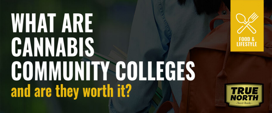 What Are Cannabis Community Colleges & Are They Worth It?