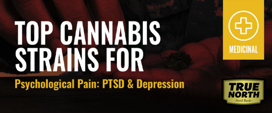 Top Cannabis Strains for Psychological Pain: PTSD Depression